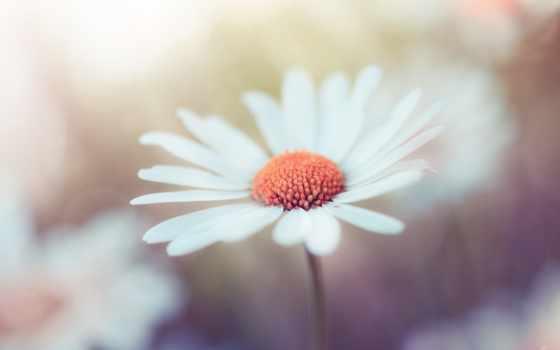 white, макро, цветы, flowers, photography, bokeh, фото, cvety, size,