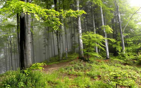природа, summer, trees, лес, landscape, красивая,