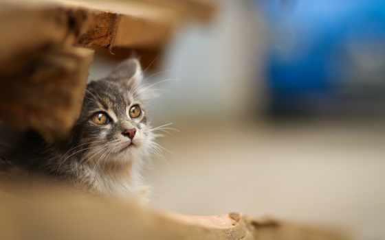 кот, фото, funny, sleepy, cats, pinterest, плакат, high, взгляд,