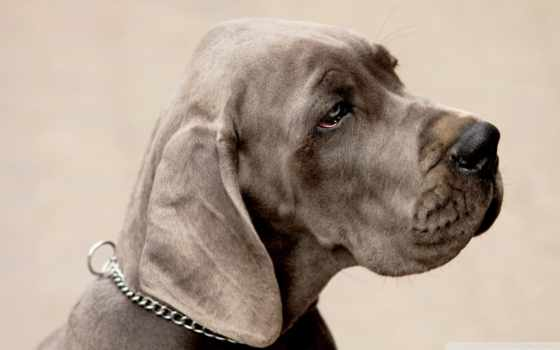 sad, dog, wallpaper, hd, free, is, space, wallpape