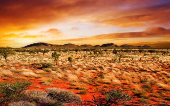 природа, растения, пустыня