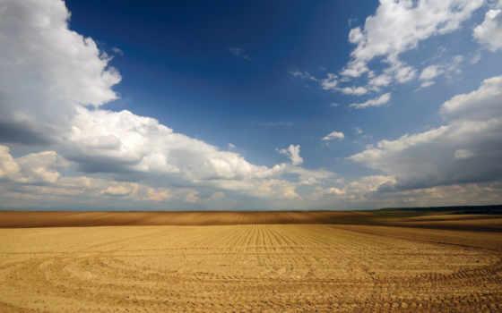 поле, пшеничное, browse