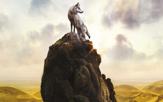 волк, волки, скале, fone, неба, jeremevoods, горы, загружено,