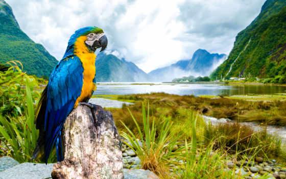 animal, macaw, птица, yellow, blue, animais, todos, попугай,
