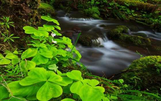 красавица, природы, природа, великолепные, нежная, нежной, природой, неповторимой, умиротворяющей, прекрасной,
