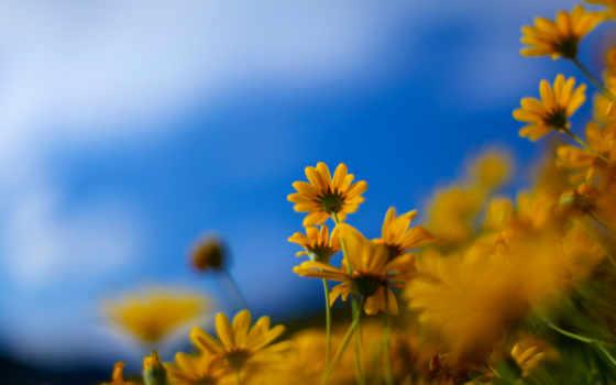 full, cvety, природа, цветки, весенние, весна, красивые, цветы,