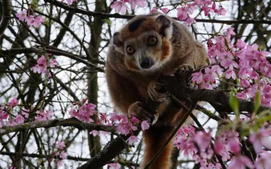 обезьяна, дерево, browse, zoo, free, ipad, прикольная, pixabay, images, small, steam,