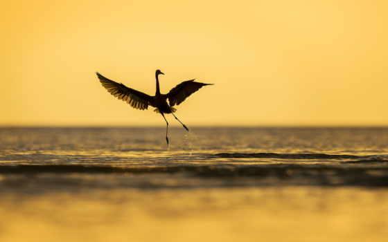 птица, maastik, море, природа, волна, taevas, parede, tapetes, драйвера,