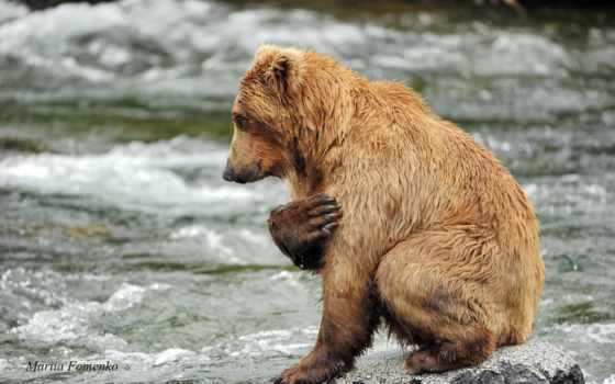медведь, яndex, коллекциях