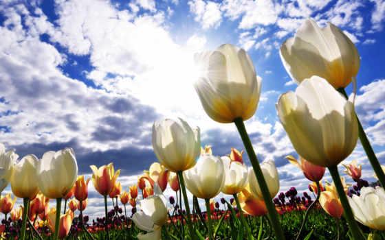 цветы, поля, небо