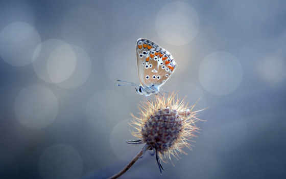 природа, мотылек, цветок, бабочка, блики,