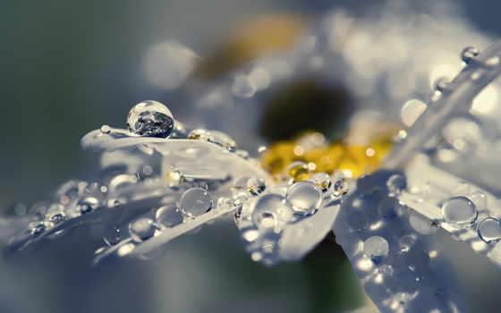 макро, цветы, капли