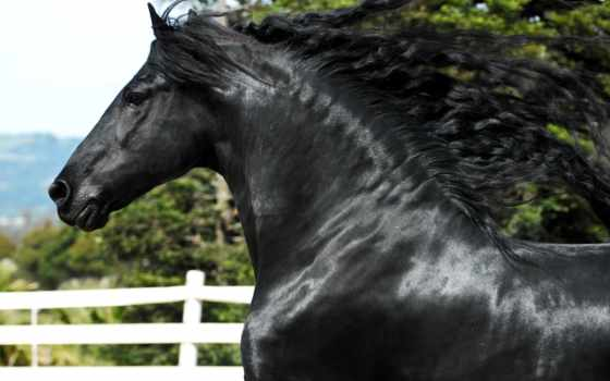 лошадь, лошадей, лошади