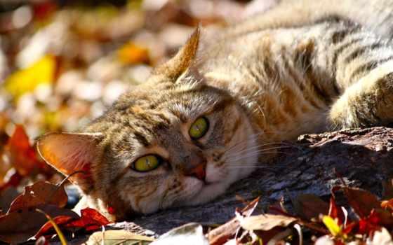 природа, пейзажи -, красивые, животные, фэнтези, mixed, animal, природы, incredible,