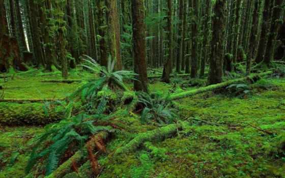лес, природа, trees, папоротник, мох, landscape,