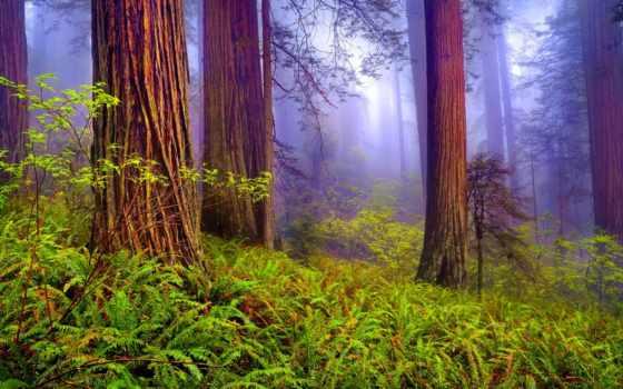 лес, misty, природа, silent, туман, mist, serenity, trees, трава,