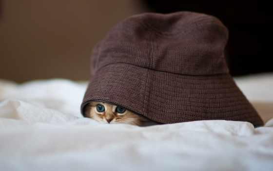 gatito, fondo, голова, gato, escritorio, miedoso, pequeño, fondos, animales,