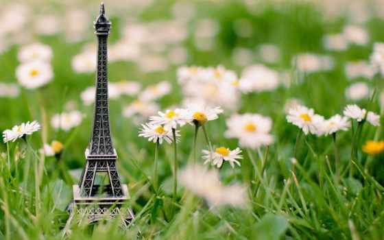ромашки, трава, turret, эйфелева, макро, сувенир, красивые,