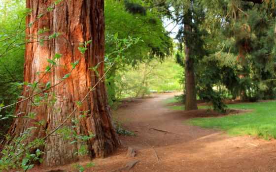 лес, trees, природа, сосны, трава, агентология, яndex, summer, moreover, пейзажи -,