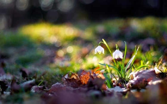 природа, цветы, макро Фон № 42214 разрешение 1920x1200