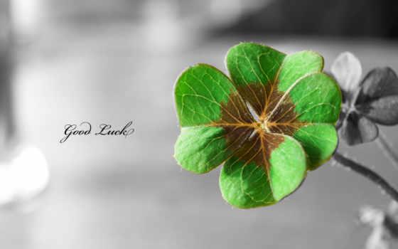 clover, четырехлистный, luck, виде, хороший, sign,