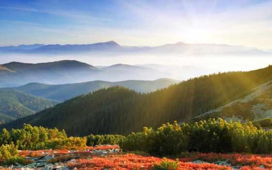 лес, туман, рассвет