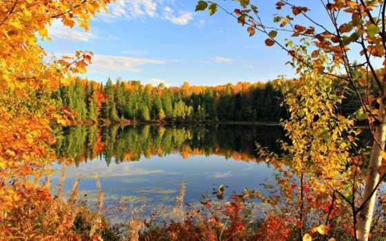 осень, золотая, листья