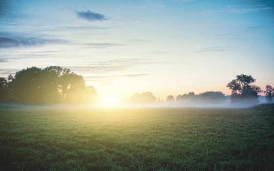 утро, роса, туман