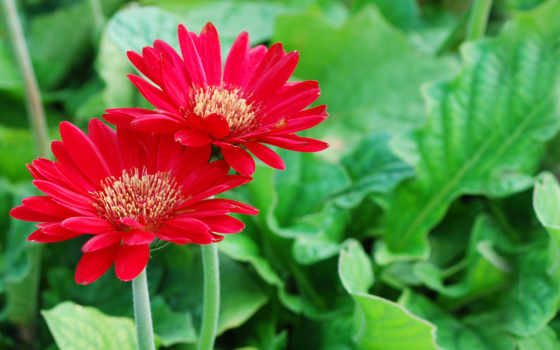 cvety, красные