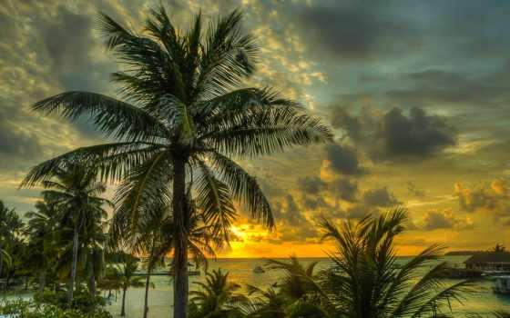 пальмы, закат, maldives