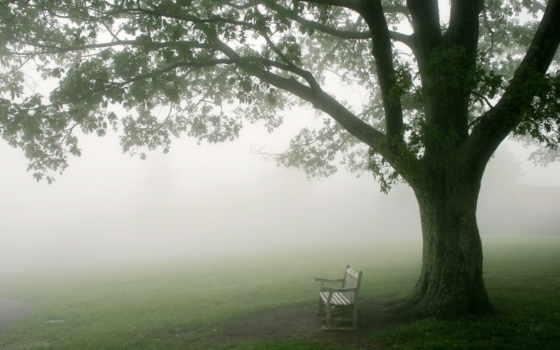 телефон, free, туман