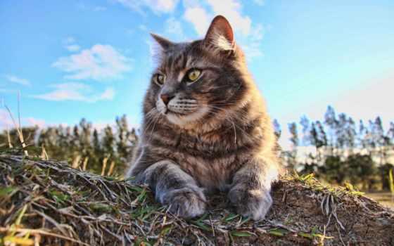 кошки, trees, кот, теме, collector, широкоформатные, осенние, количество, capa,