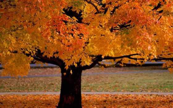 осень, herbst, нам, мужчина, россия, прикол, fetch