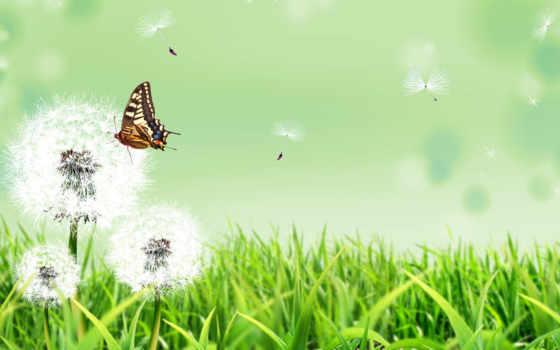 ребенок, центр, группа, wellness, бабочка, cvety, одуванчик, трава, health