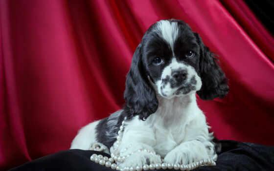 щенок, spaniel, ожерелье, cute, spotted, spot, гортензия