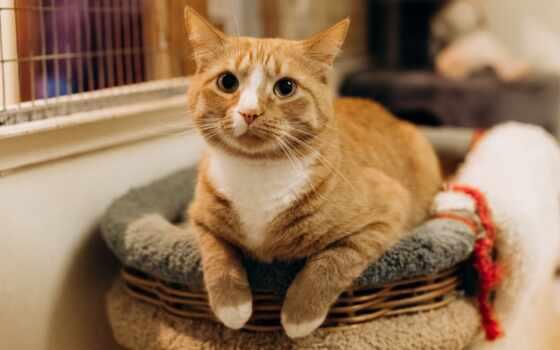 кот, кровать, ан, смотреть, semanin, фото, month