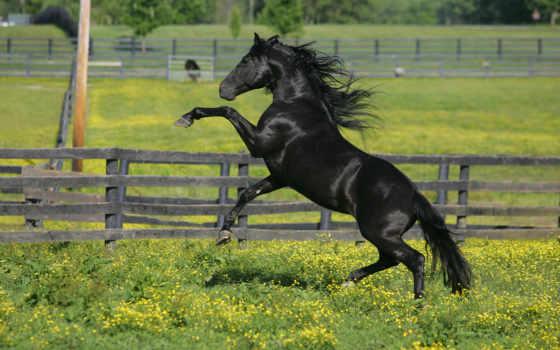 пастбище, лошадь
