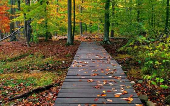природа, осень, лес Фон № 81041 разрешение 1920x1200