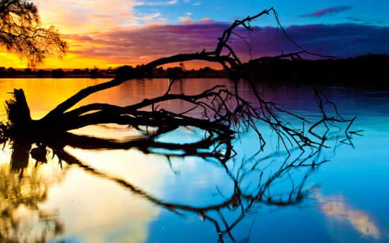 fallen, дерево, озеро, закат, природа, desktop, отражение,