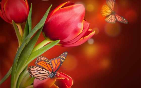 cvety, розы, бабочка, живые, бабочки, fone, android, flowers, анимации,