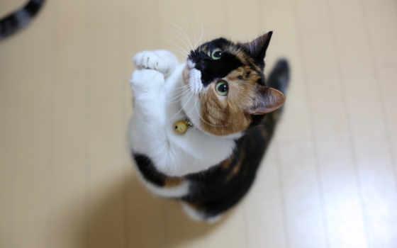 кот, views, ми, кошки, кошек, zhivotnye, продолжительность, корм, повадки, natysay,