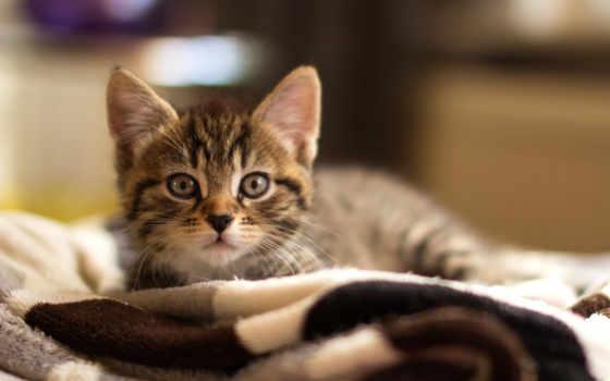 gatito, лежит, por, ми, tiembla, котенок, щенок, плед, цапля,