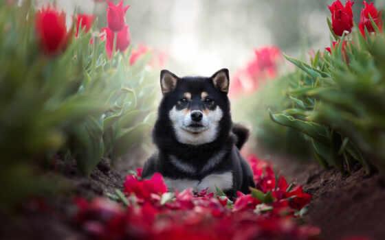 black, собака, краска, загар, red, anime, шубка, animal, time, diamond, cute