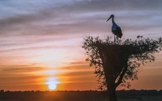закат, landscape, sun, птица, небо, branch, природа, дерево