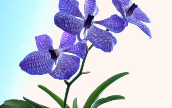 цветы, красивые Фон № 0232 отчётливость 0920x1080