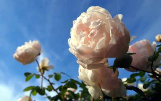 Цветы 20018