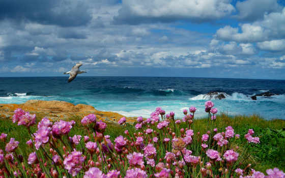 море, чайка, цветы Фон № 77078 разрешение 2560x1600