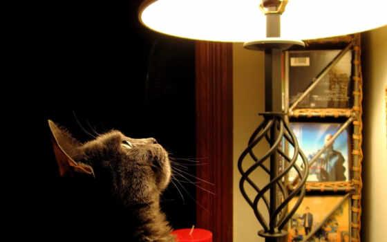 кот, ukraine, лампа, харьков, купить, лучшем, ценам, доставка, торшеры, киев,