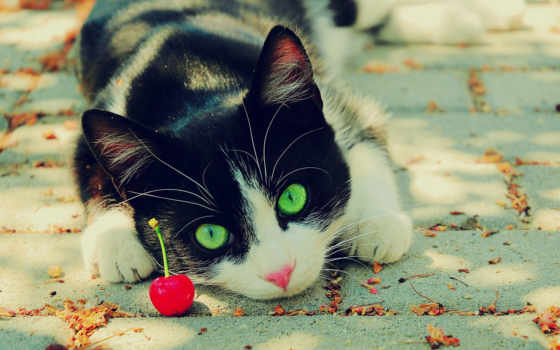 разрешениях, разных, кот