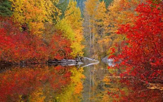осень, золотая, качестве, осени, хорошем, красивые, world, осенью, online, легенды, смотреть,